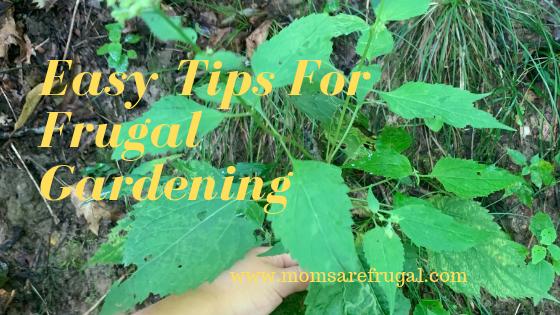 Easy Tips for Frugal Gardening