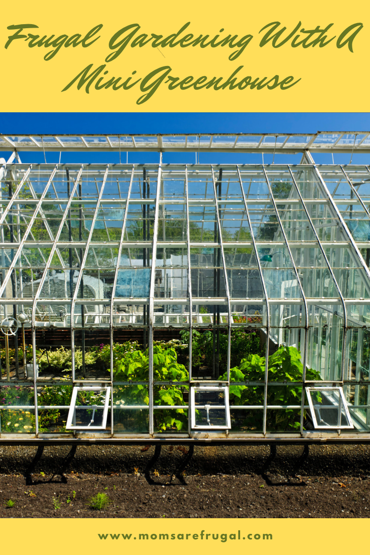 Frugal Gardening Ways to Save with a Mini Greenhouse