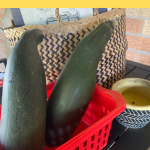 Frugal Gardening with Zucchini