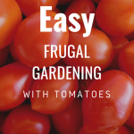 Easy Frugal Gardening with Tomatoes