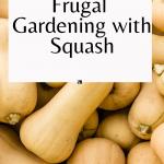 Frugal Gardening with Squash