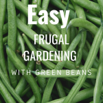Easy Frugal Gardening  with Green Beans