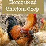 Suburban Homestead Chicken Coop Design